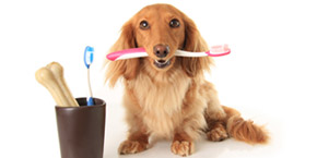 dog teeth cleaning Scottsdale